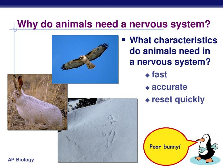 Why do animals need a nervous system l.jpg