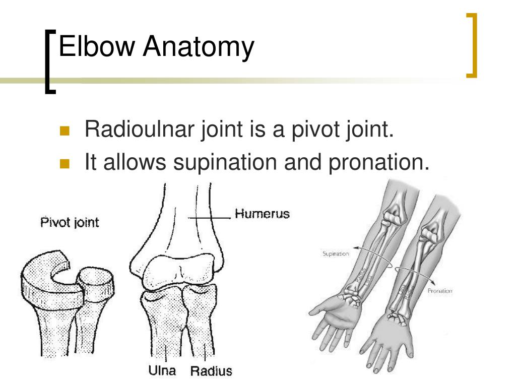 Anatomy Of Elbow Joint Ppt