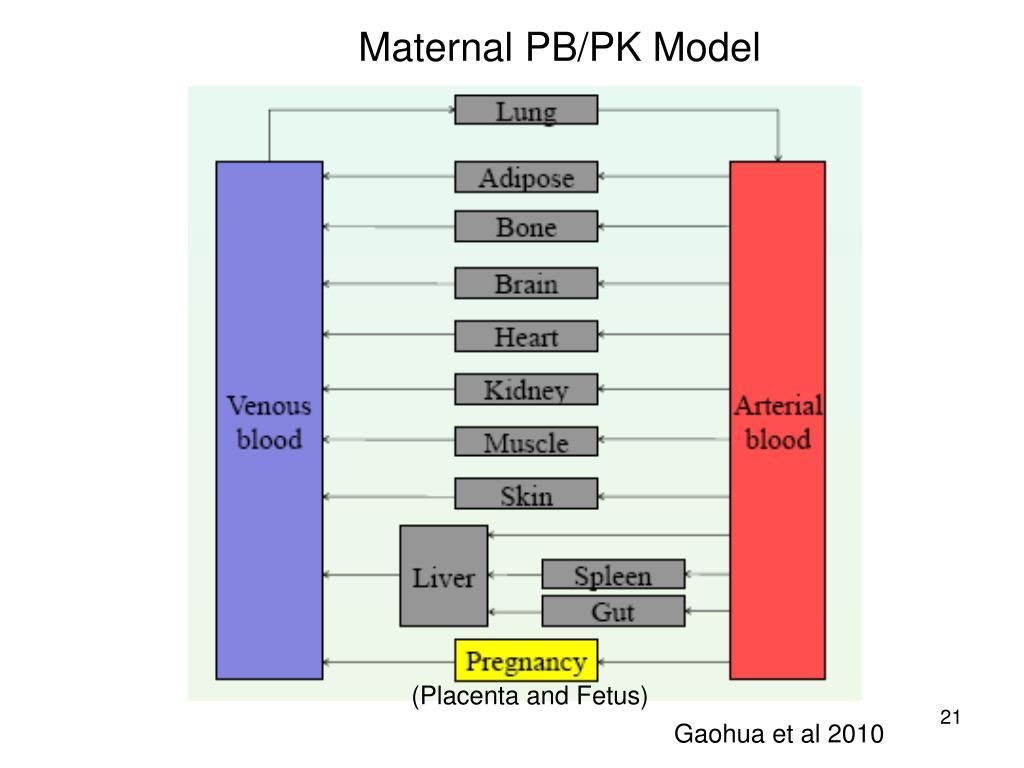 Maternal PB/PK Model