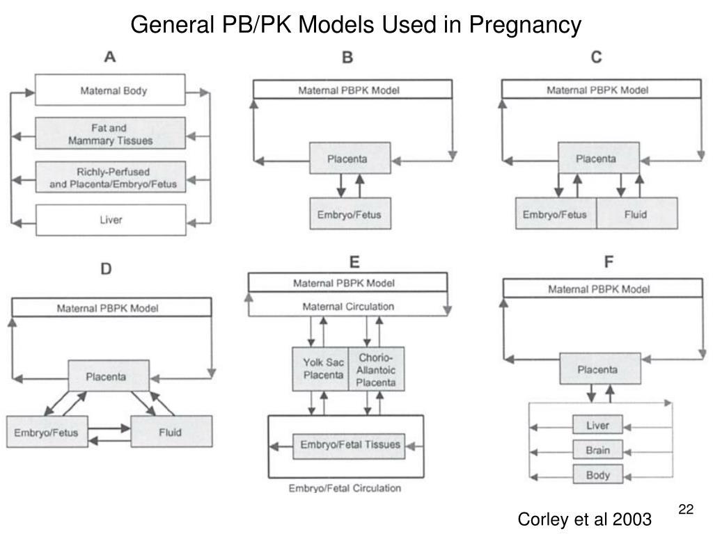 General PB/PK Models Used in Pregnancy
