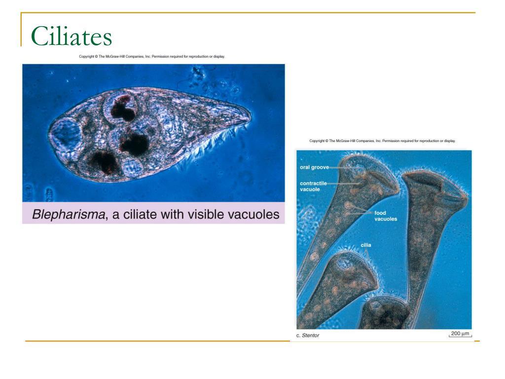 Ciliates