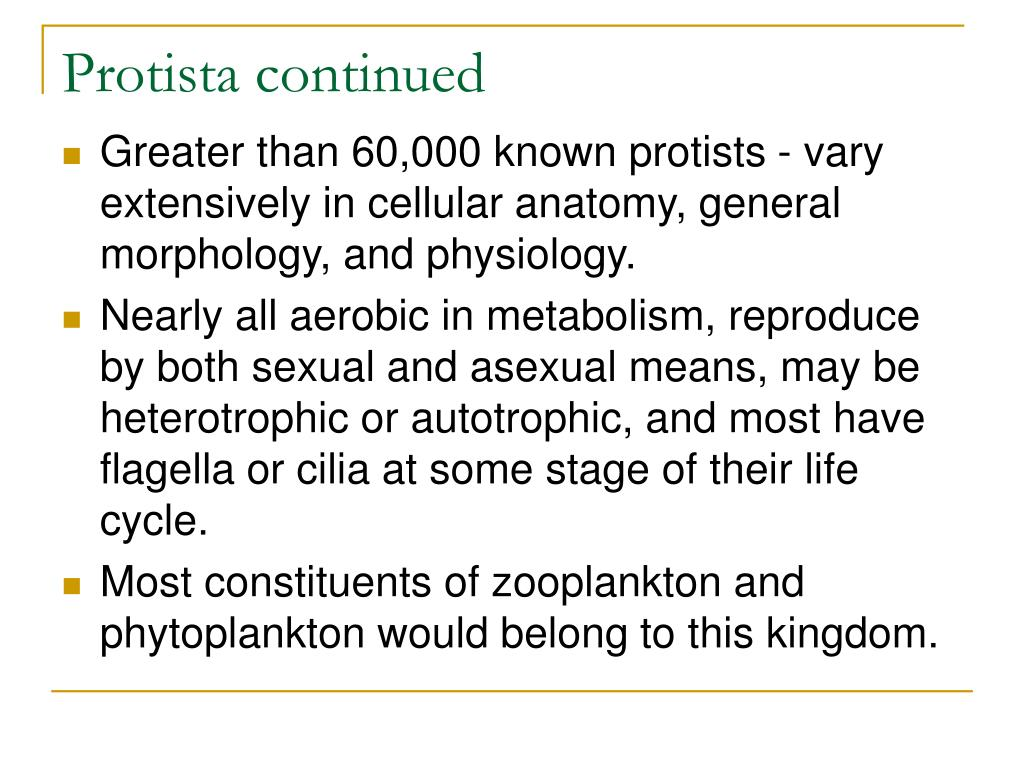 Protista continued