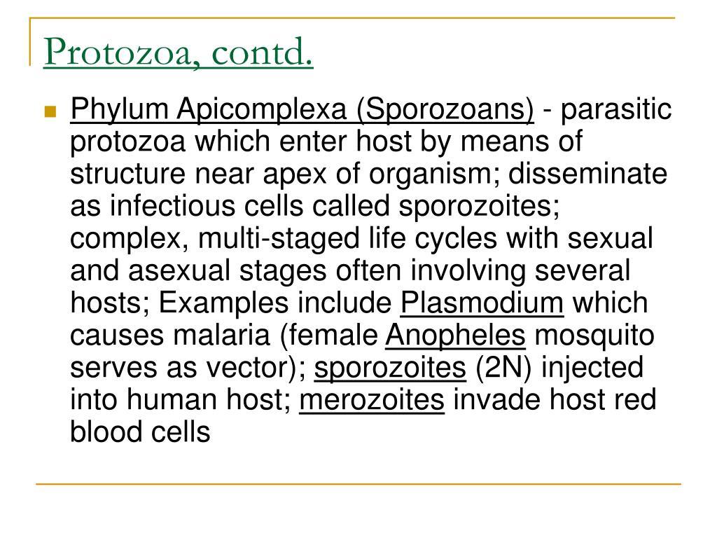 Protozoa, contd.