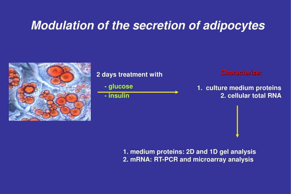 Modulation of the secretion of adipocytes