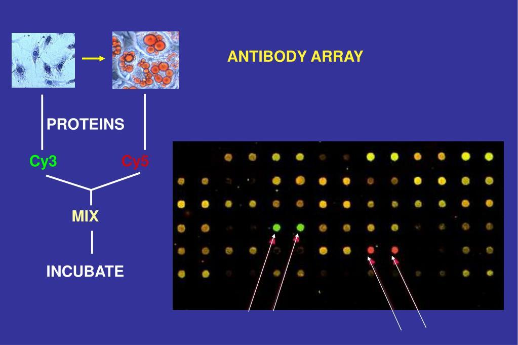 ANTIBODY ARRAY