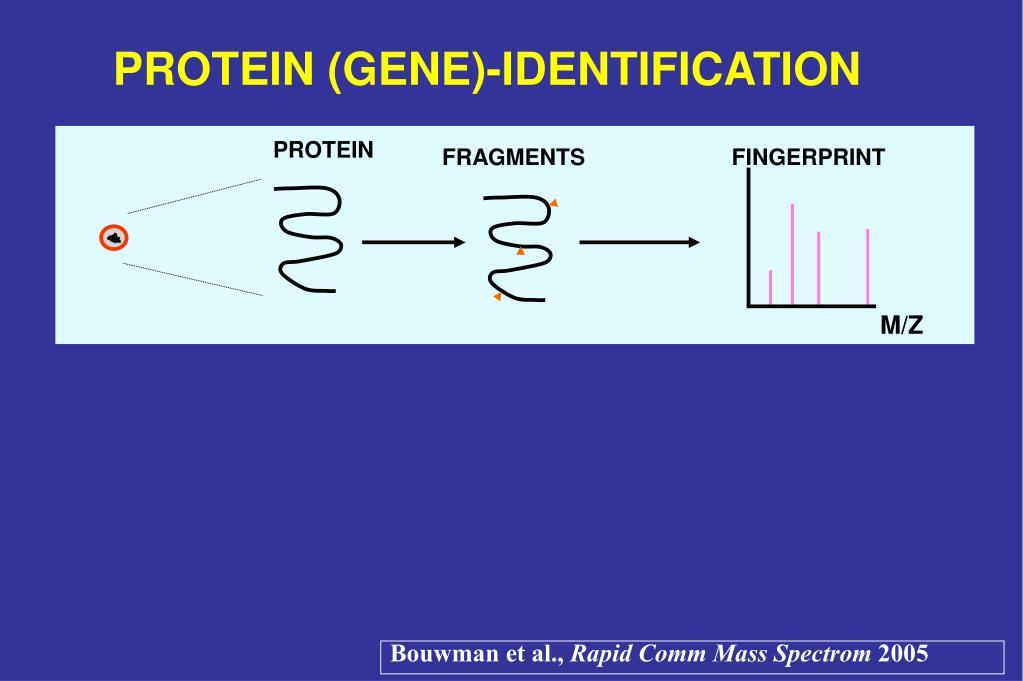 PROTEIN (GENE)-IDENTIFICATION