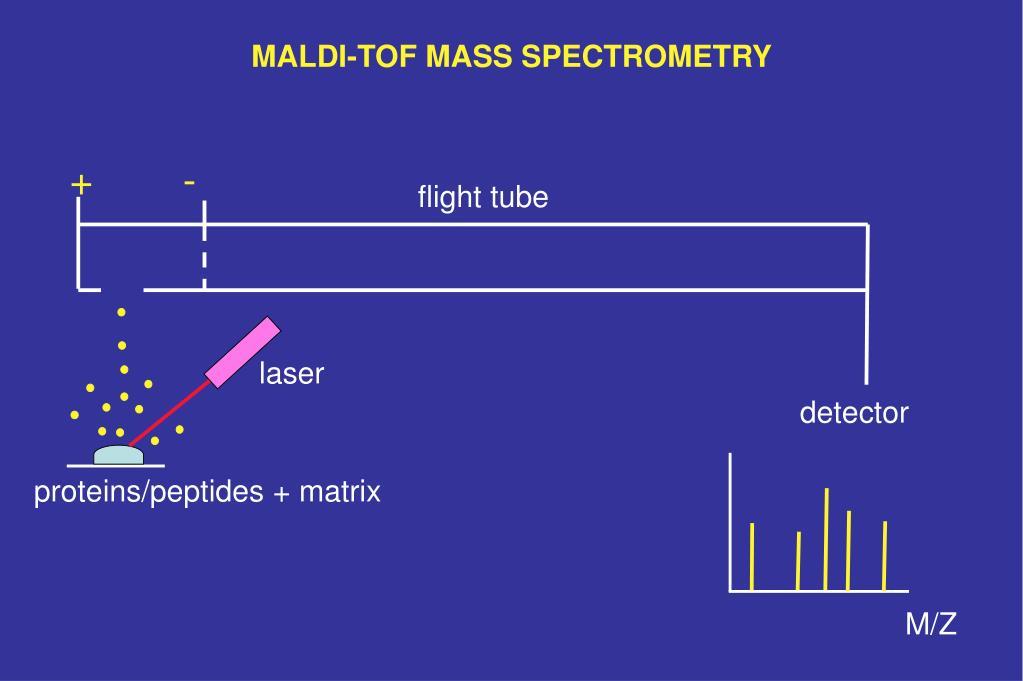 MALDI-TOF MASS SPECTROMETRY