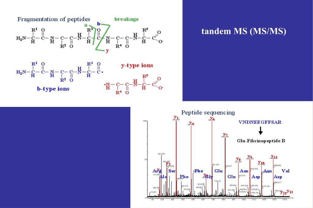 tandem MS (MS/MS)