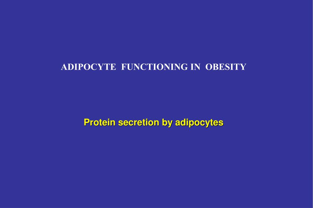 ADIPOCYTE  FUNCTIONING IN  OBESITY