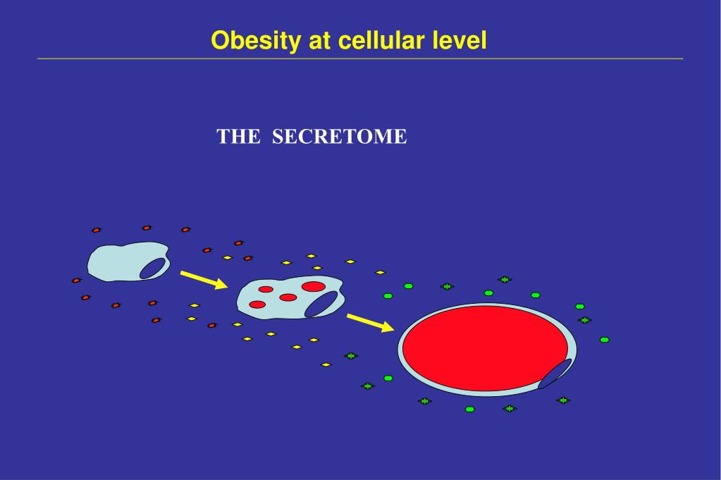 Obesity at cellular level