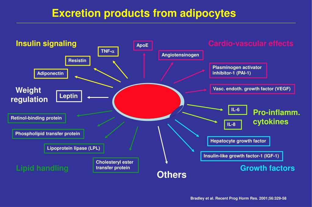 Excretion products from adipocytes