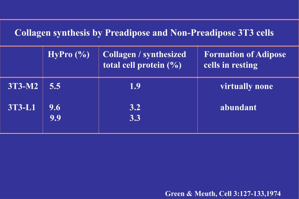 Collagen synthesis by Preadipose and Non-Preadipose 3T3 cells