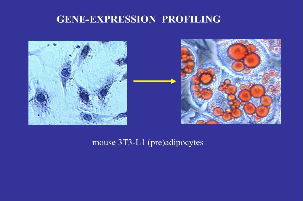 GENE-EXPRESSION  PROFILING