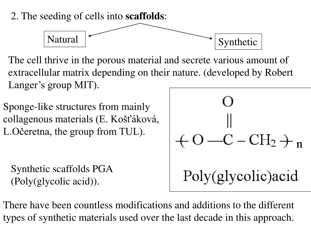2. The seeding of cells into