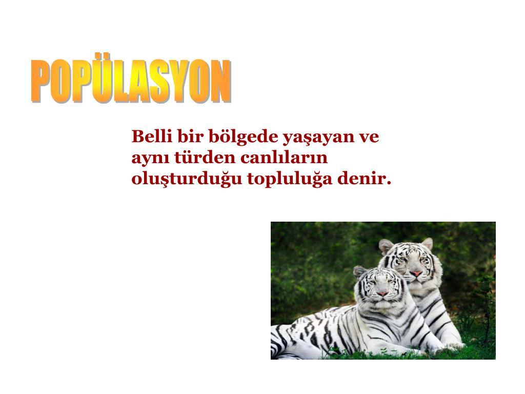 POPÜLASYON