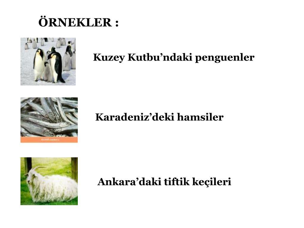 ÖRNEKLER :
