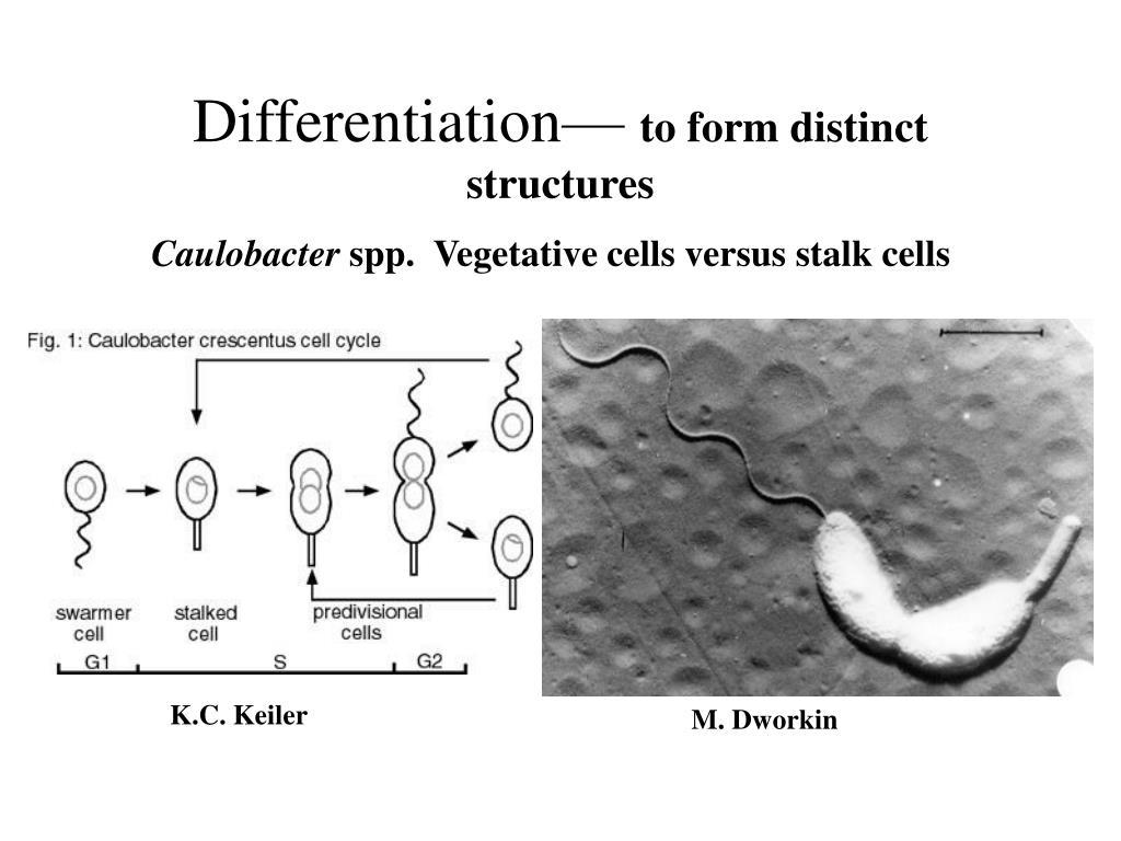Differentiation—