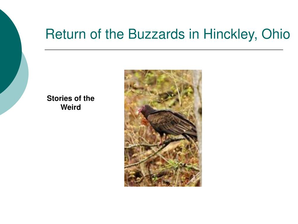 Return of the Buzzards in Hinckley, Ohio