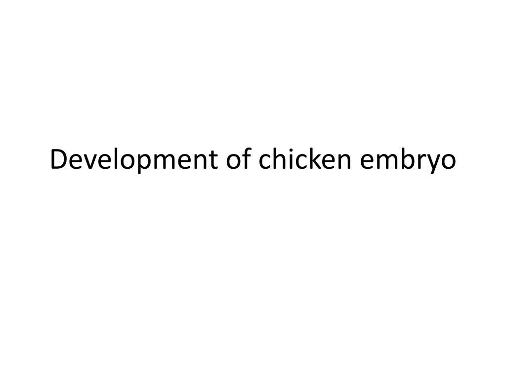 Development of chicken embryo