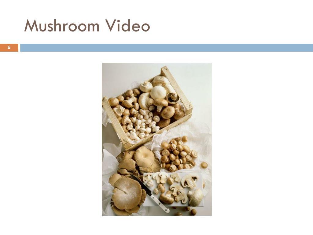 Mushroom Video