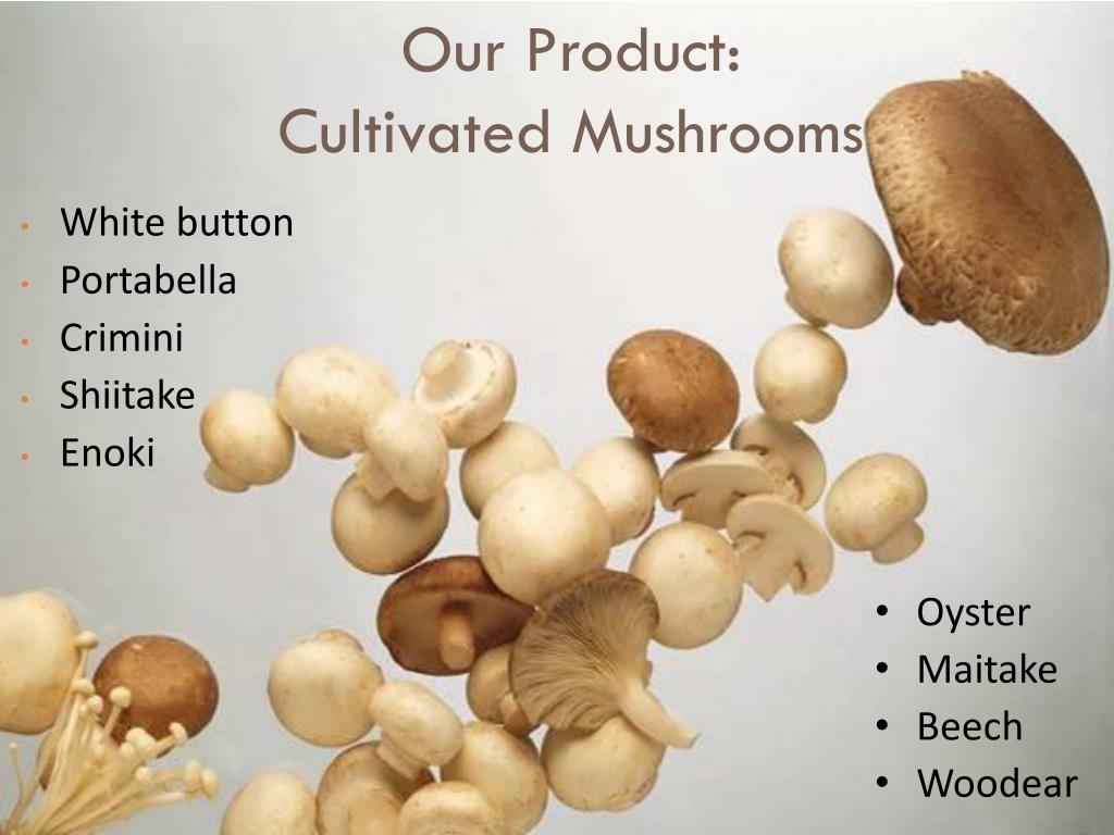 Our Product: