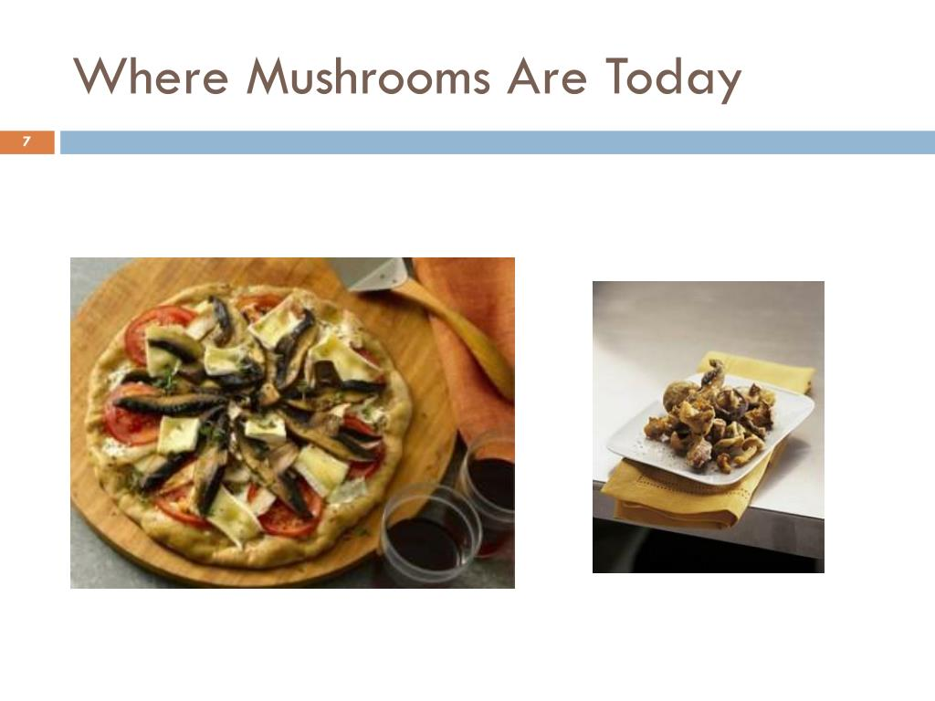 Where Mushrooms Are Today