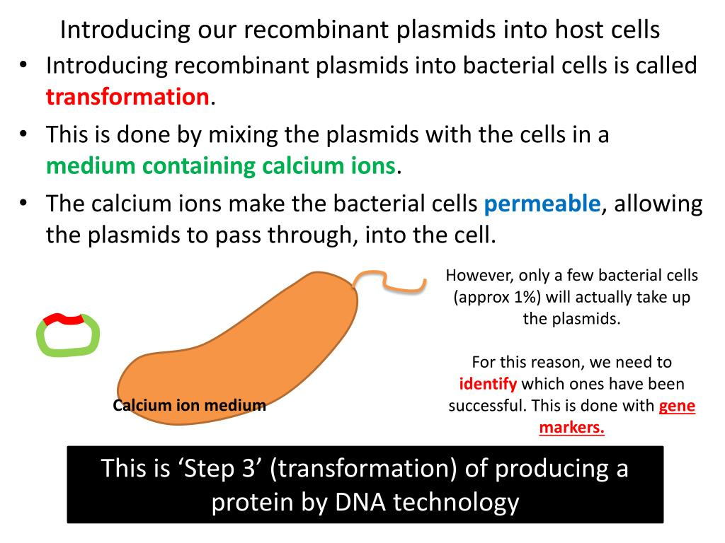Introducing our recombinant plasmids into host cells