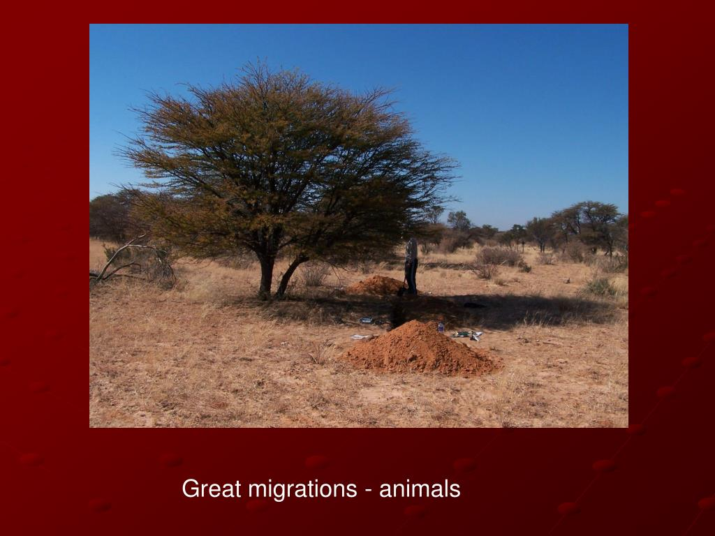 Great migrations - animals