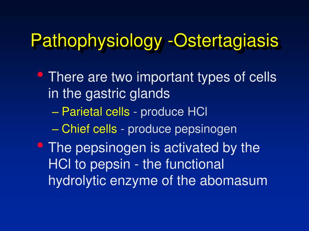 Pathophysiology -Ostertagiasis