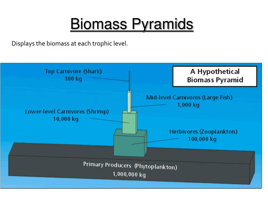 Biomass Pyramids
