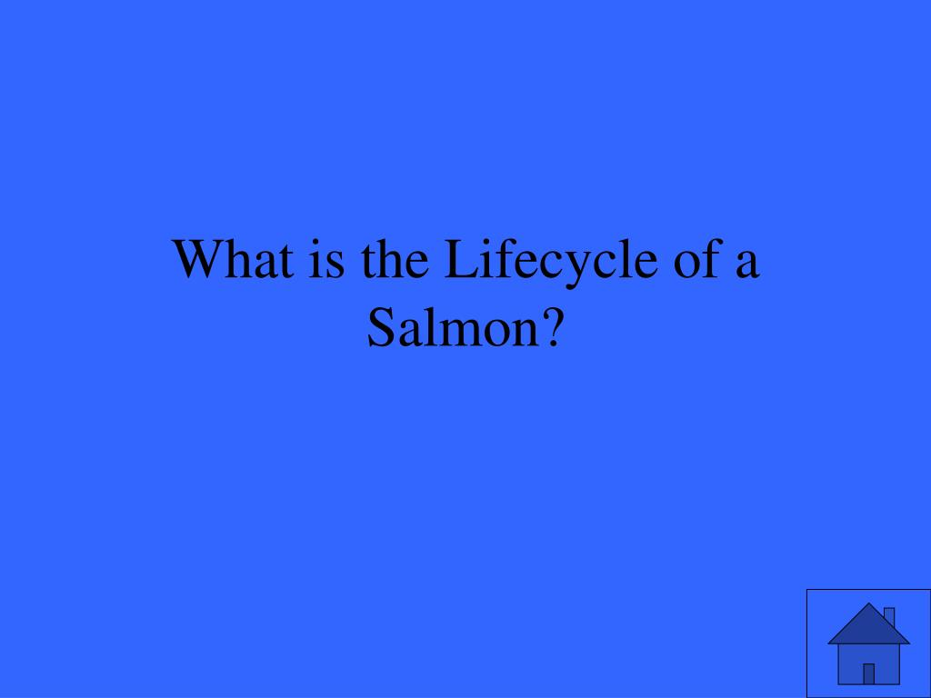 What is the Lifecycle of a Salmon?
