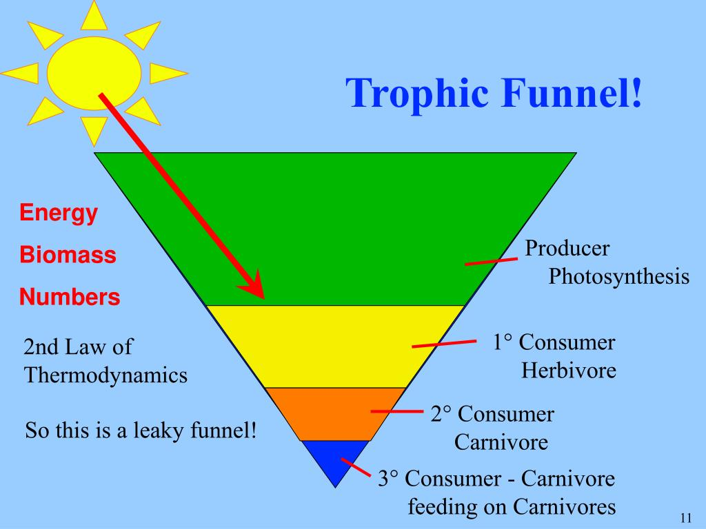 Trophic Funnel!