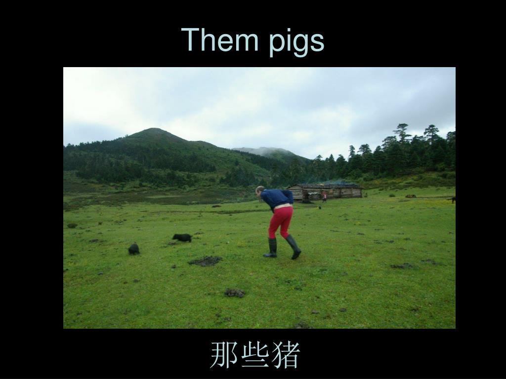 Them pigs