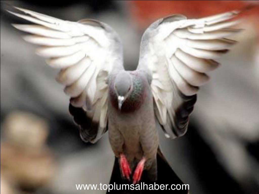 www.toplumsalhaber.com