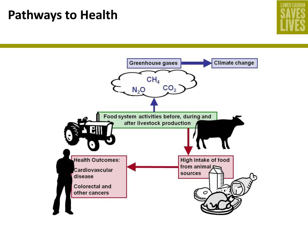 Pathways to Health