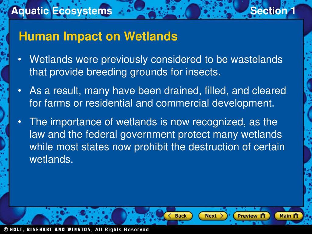 Human Impact on Wetlands