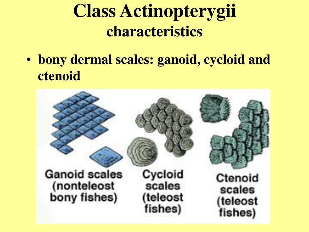 Class Actinopterygii