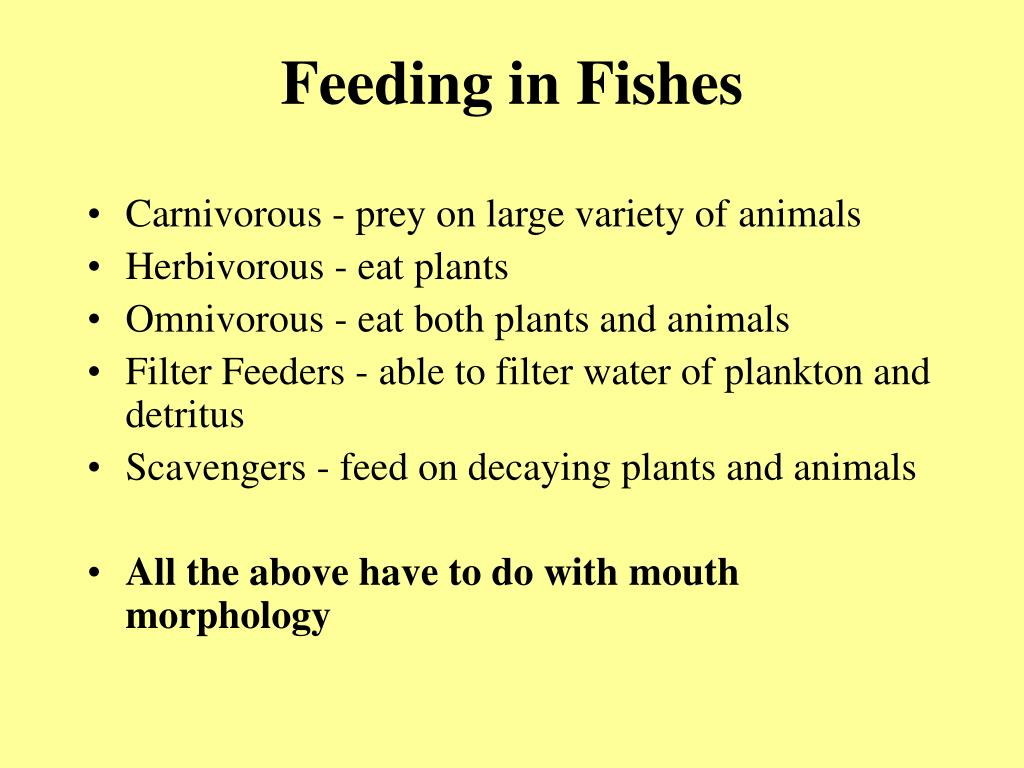 Feeding in Fishes