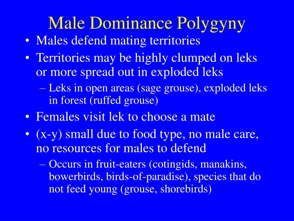 Male Dominance Polygyny