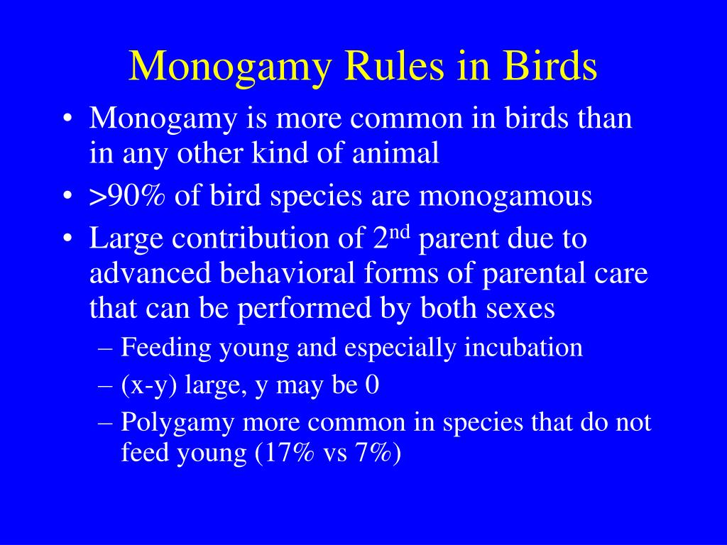 Monogamy Rules in Birds