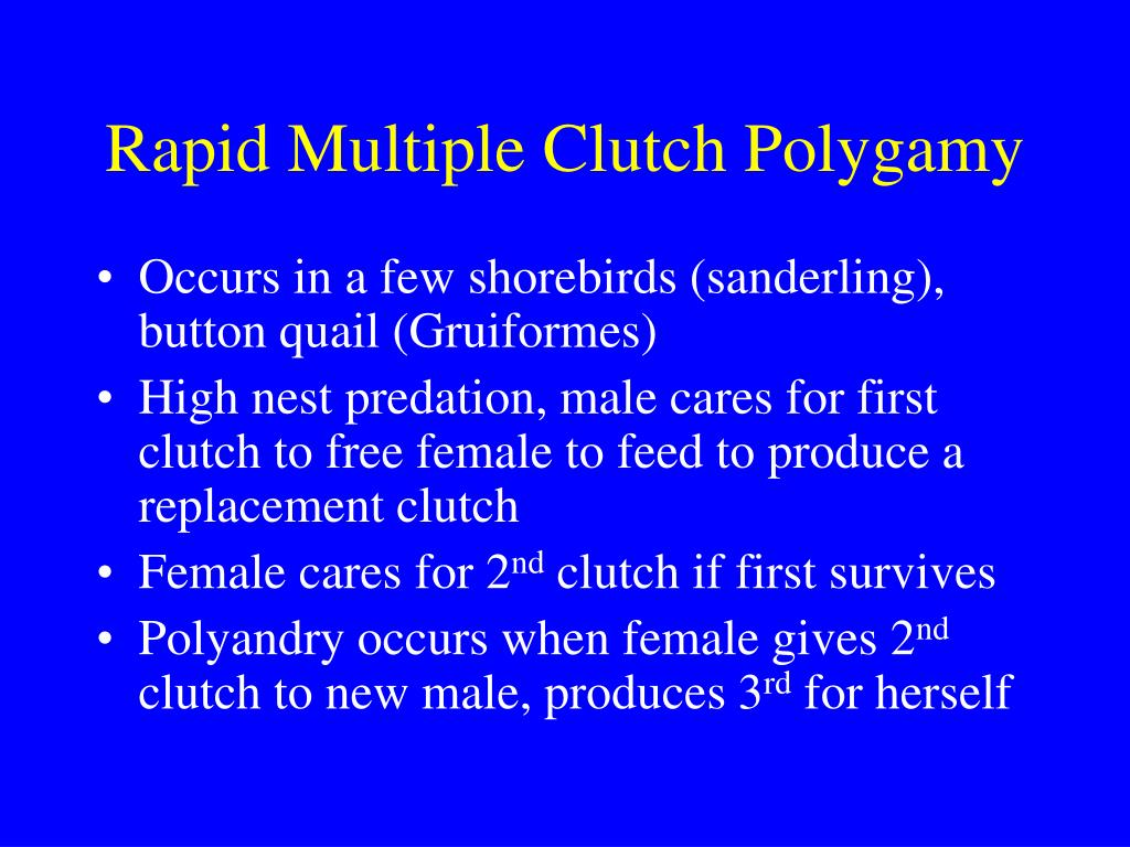 Rapid Multiple Clutch Polygamy