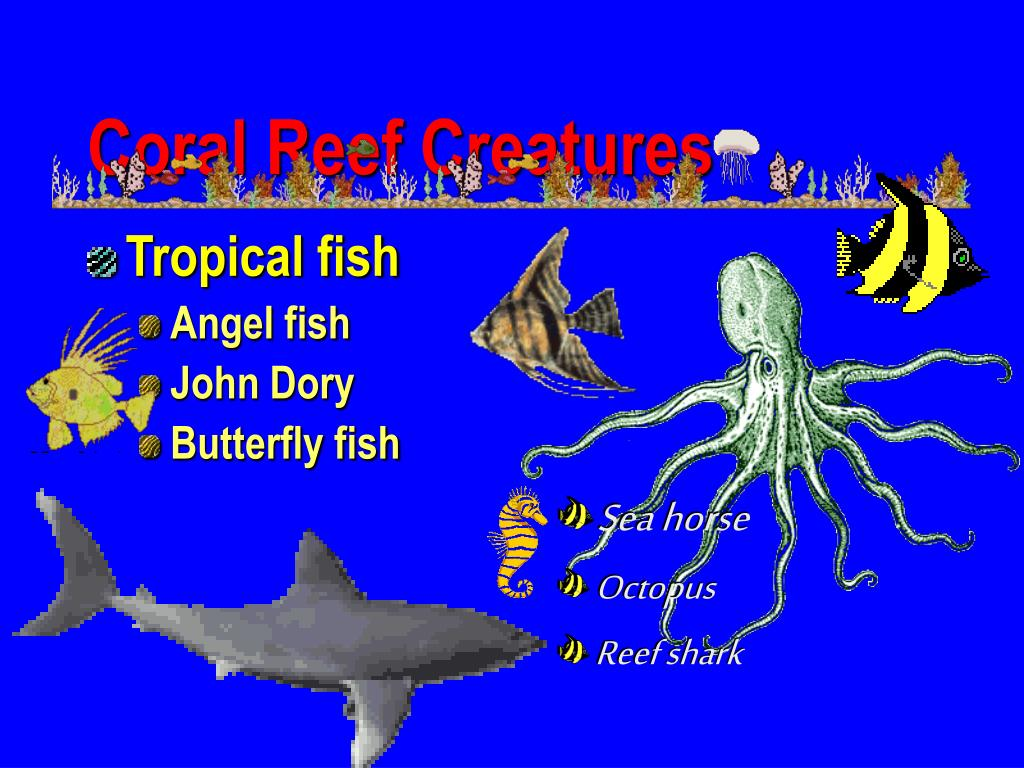 Coral Reef Creatures