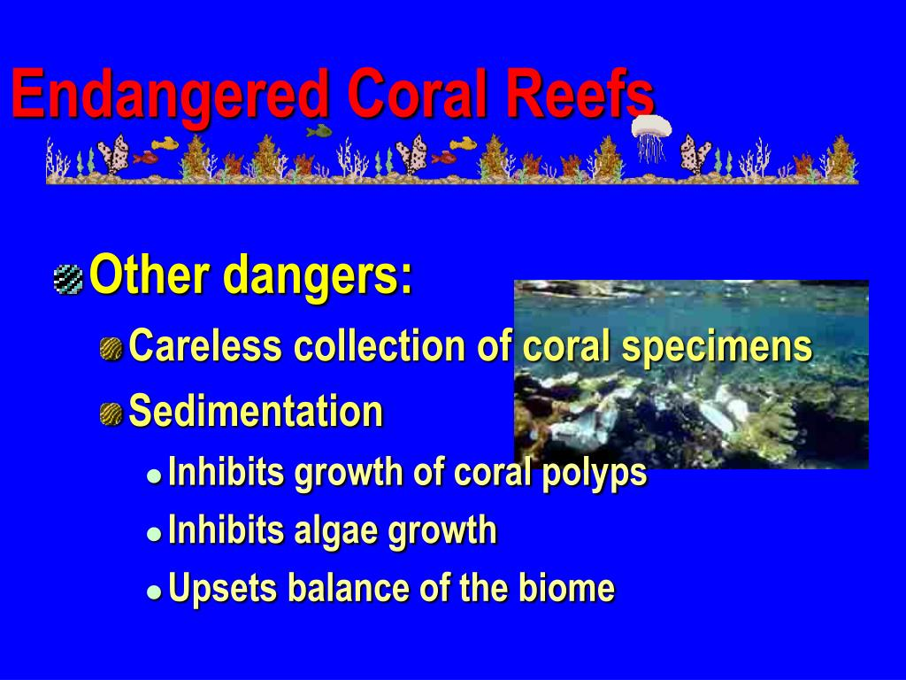 Endangered Coral Reefs