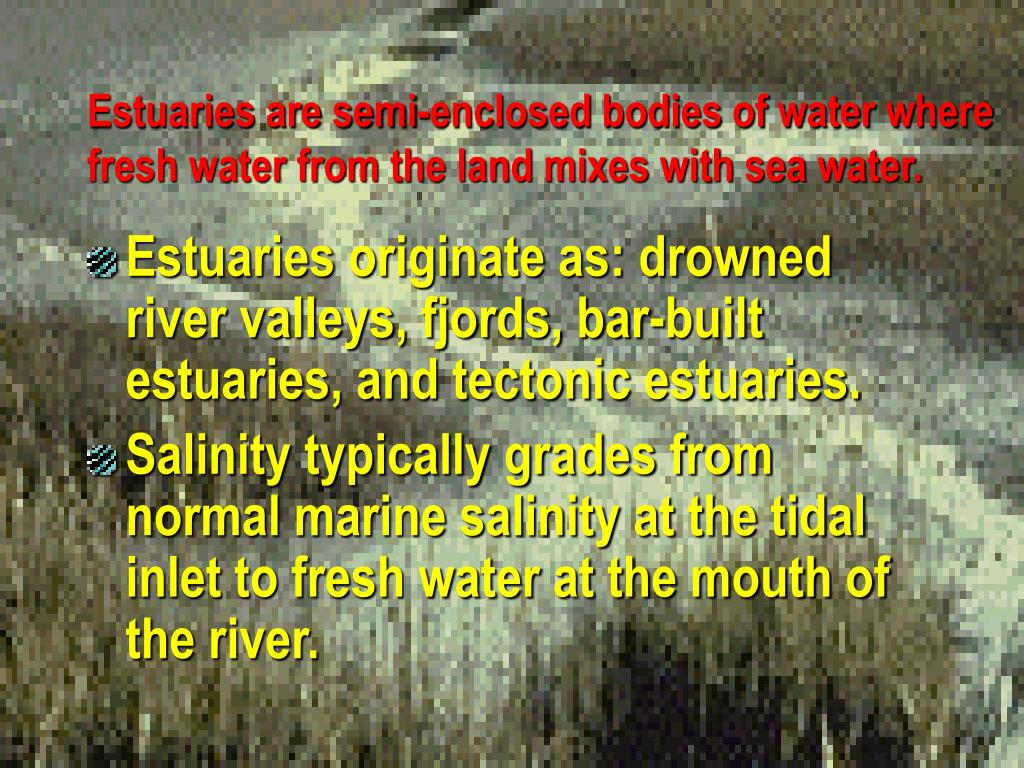 Estuaries are semi-enclosed bodies of water where fresh water from the land mixes with sea water.
