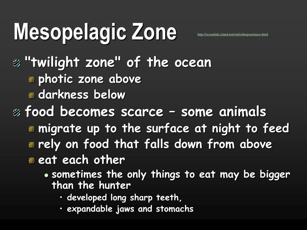 Mesopelagic Zone