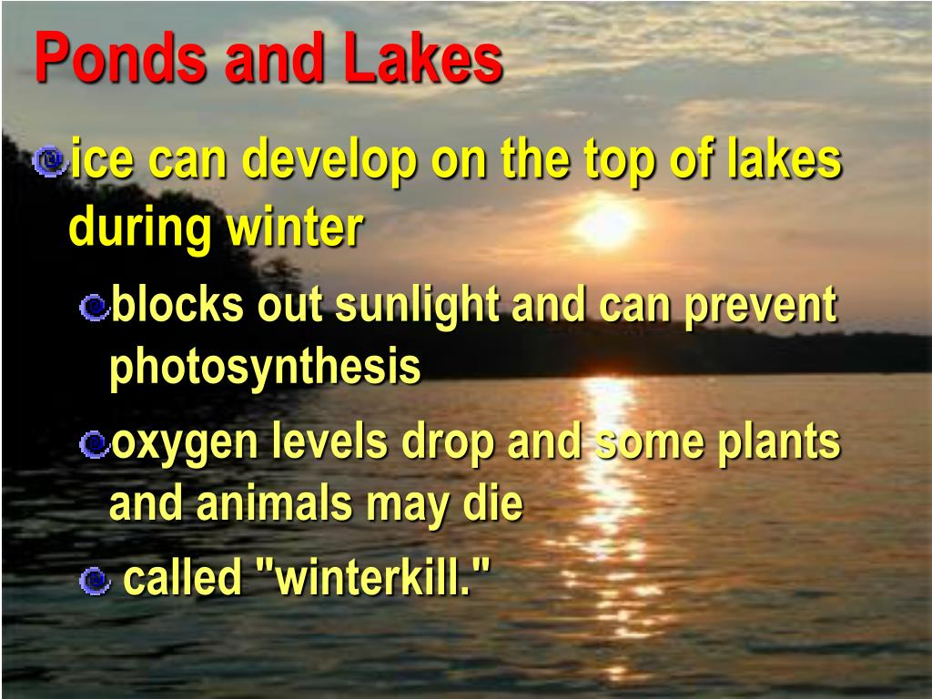 Ponds and Lakes