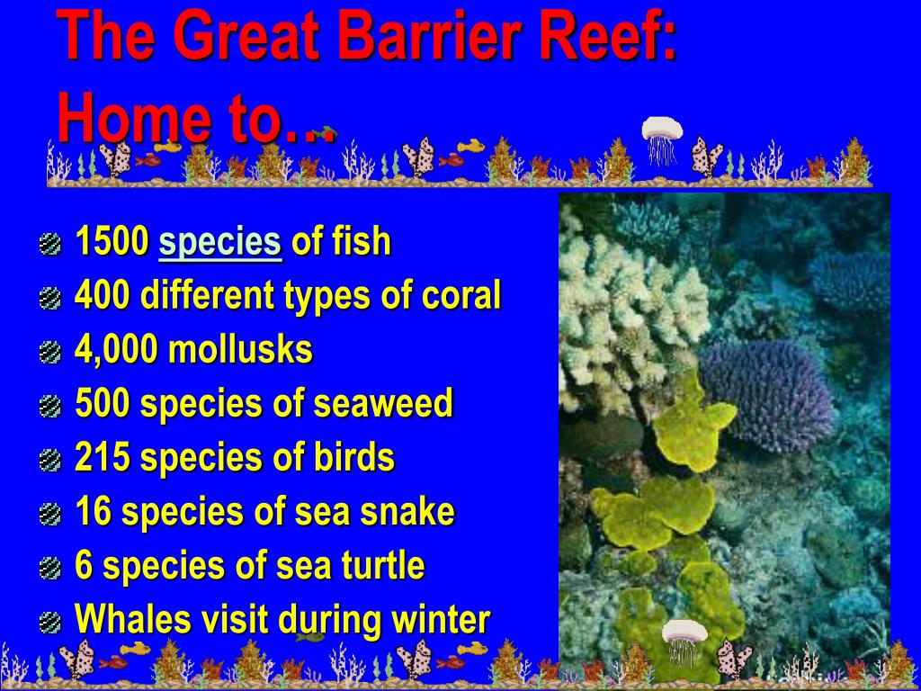 The Great Barrier Reef:  Home to…
