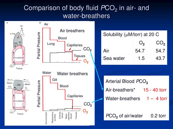 Comparison of body fluid p co 2 in air and water breathers