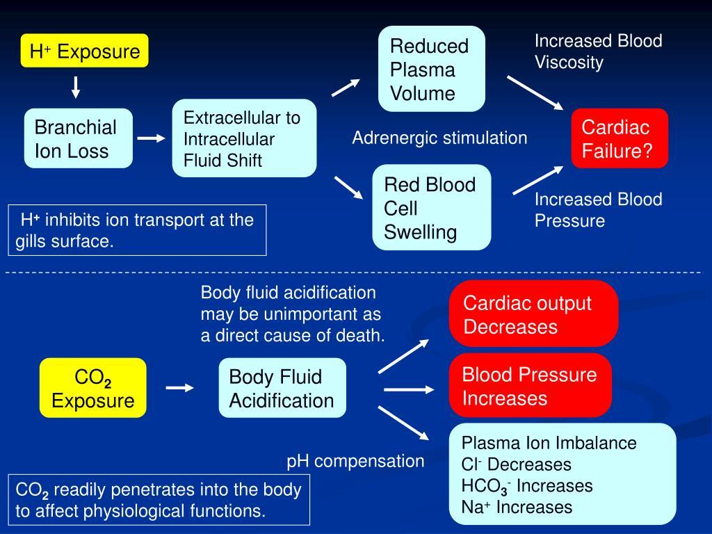 Cardiac output Decreases