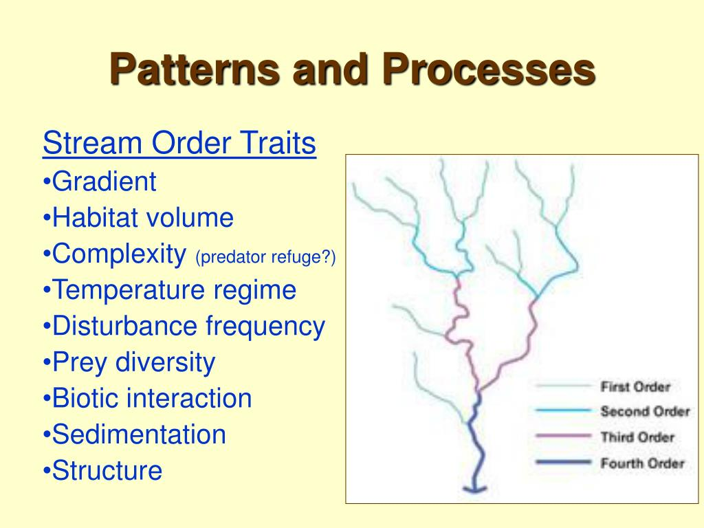 Patterns and Processes